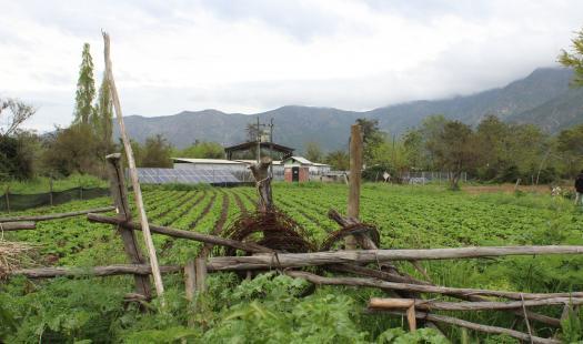 Beneficios de combinar energía solar y agricultura