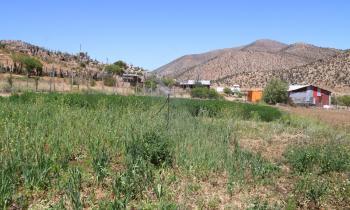 Sistema solar del Ministerio de Energía permite a crianceros obtener forraje y hortalizas